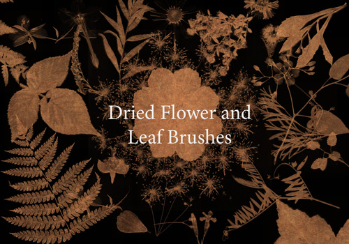 Dried Leaves Flower Brushes