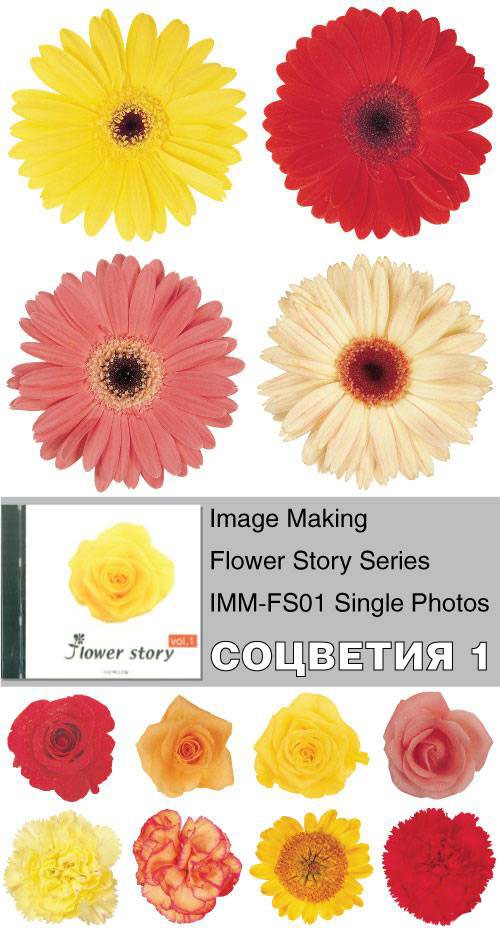 Image Making - Flower Story Series - IMM-FS01 Single Photos