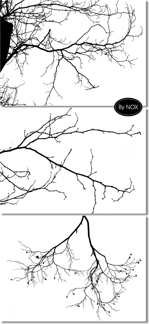 Black Branch on Wite Backgrounds - ������ �����, ����� ���