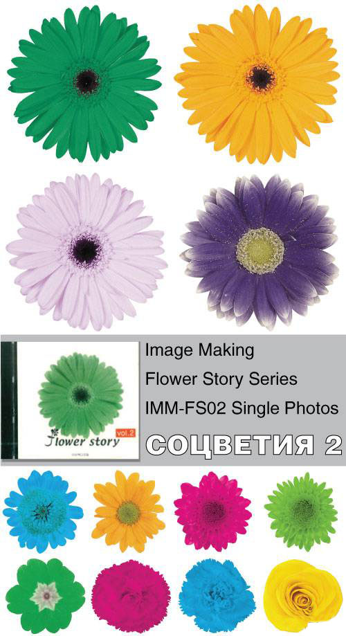 Image Making - Flower Story Series - IMM-FS02 Single Photos
