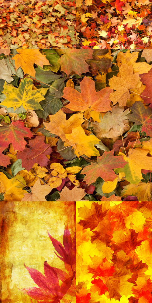 Texture backgrounds autumn leaves # 2