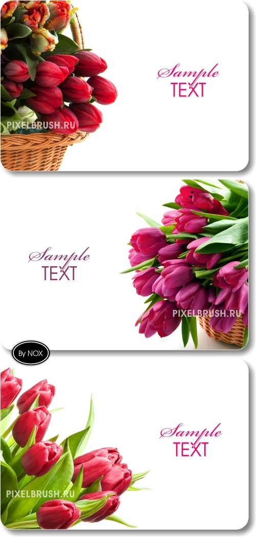 White Backgrounds, Tulips - ����� ���, ��������