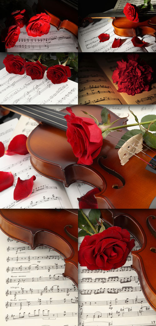 Notes, roses and the Violin