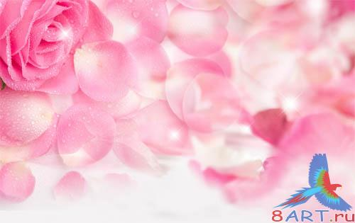 PSD - Rose Petals Template
