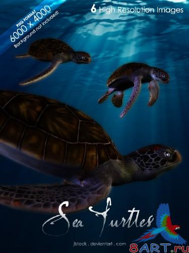 Sea Turtles Pack