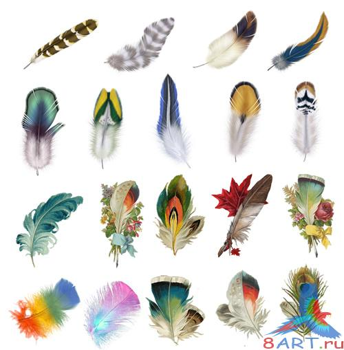 PSD Source - Feathers Images