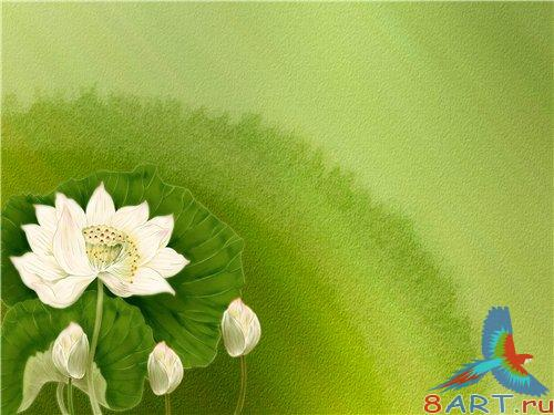 PSD - Green Backgrond with white flowers
