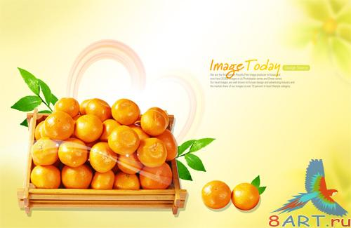 Fruits PSD