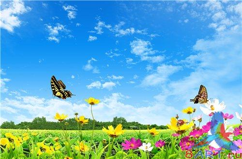 PSD - Field with Yellow Flowers and Butterflies