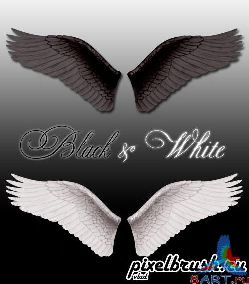 Wings Angel - Black & White - Крылья ангела, белые также черные (Шаблон в течение формате Photoshop)