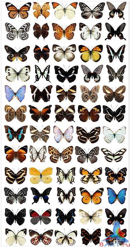 Butterfly collection in PSD