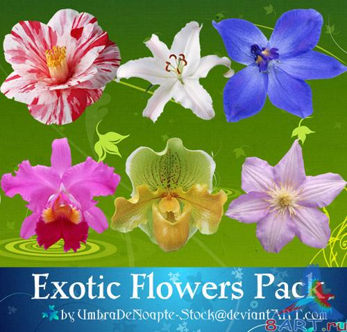 Exotic Flowers Pack (PSD)
