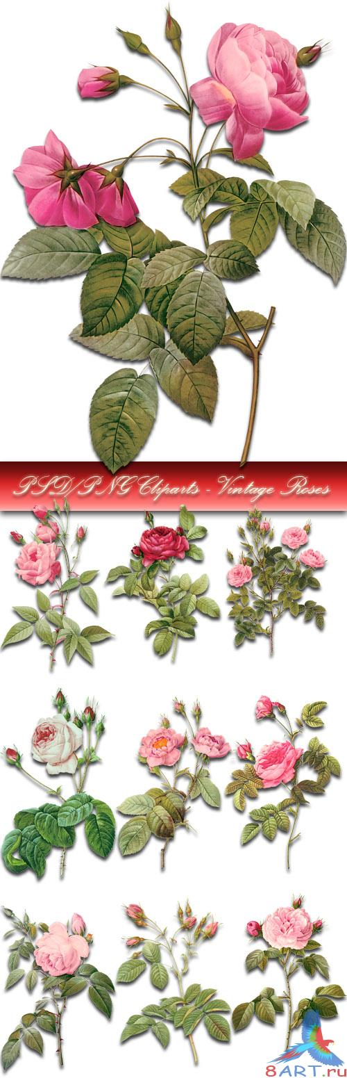 PSD/PNG Cliparts - Vintage Roses